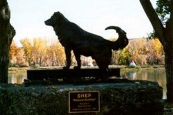 shepa Monuments dogs faithful friends of man